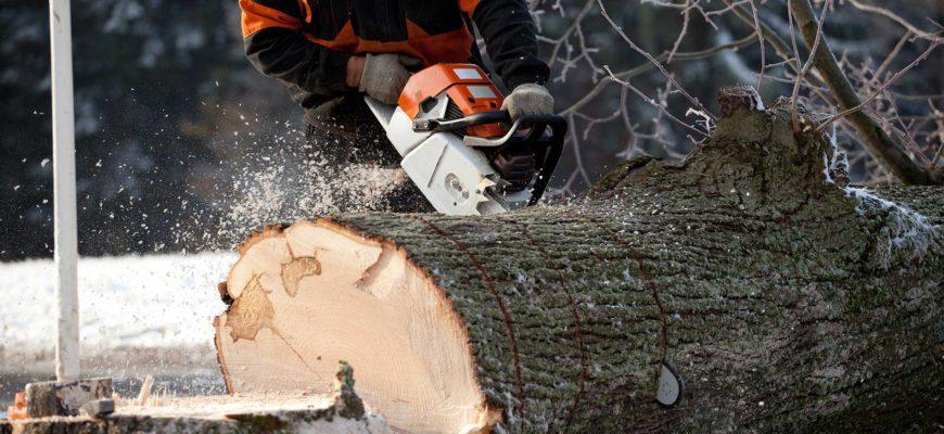 tallar arbres